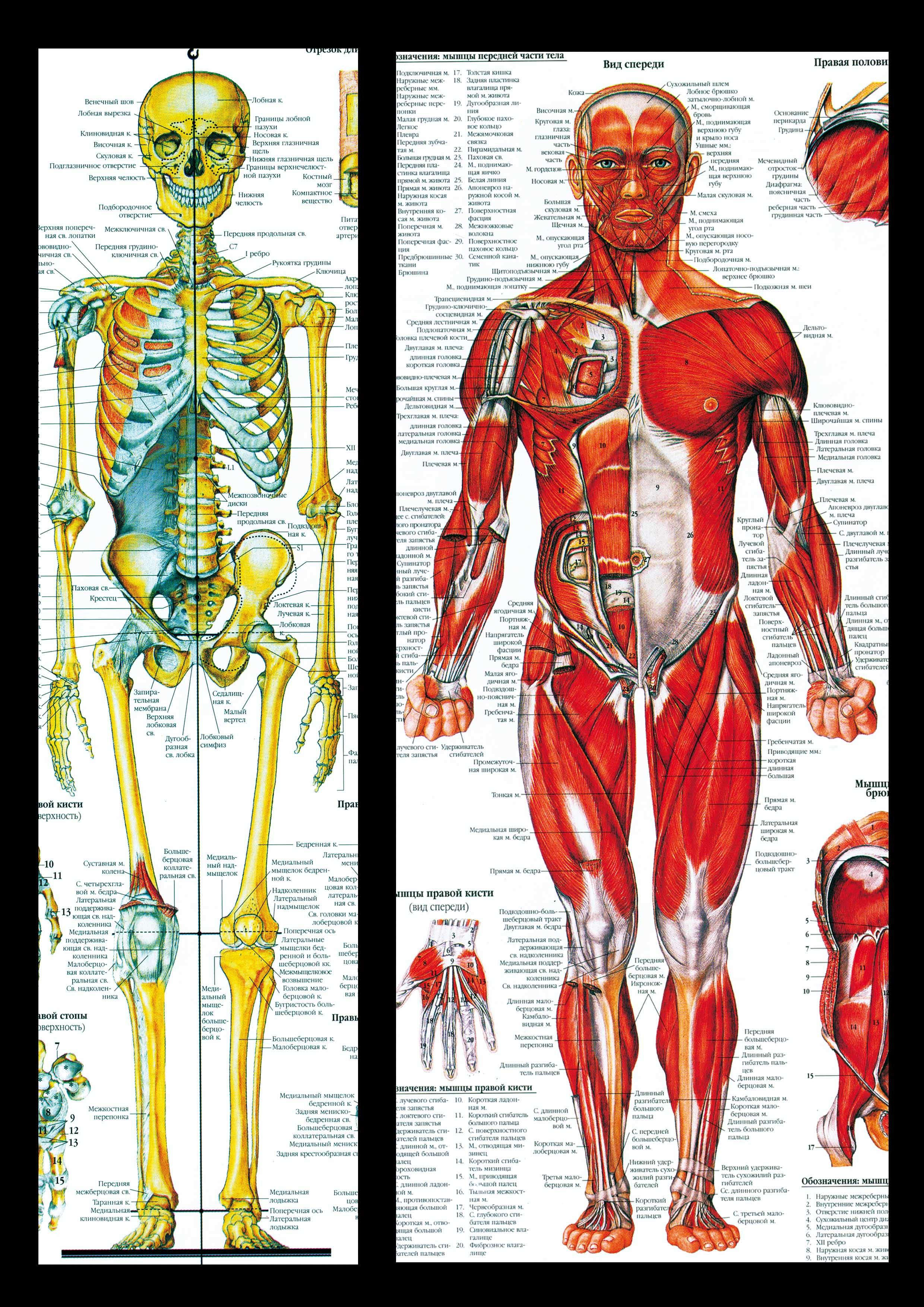 Частный урок анатомии онлайн 3 фотография